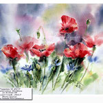 Poppies III 2017 / Watercolour 30x40cm on Arches HP © janinaB. 2017