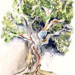 Olivenbaum (O4) / Watercolour 18x25cm