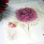 rote Dalie (14) / Watercolour 30x40cm