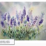 Lavender I  2017 (20) / Watercolour 30x40cm ©janinaB.2017