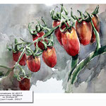 Tomatoes III 2017 / Watercolour 30x40cm on Arches CP © janinaB. 2017