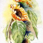 Sonnenblumen-II-2008  © janinaB.