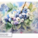 Blueberries I 2017 (13) / Watercolour 30x40cm ©janinaB.2017
