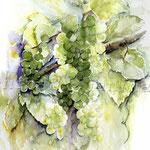 Weintrauben (7) / Watercolour 30x40cm