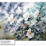 wild roses III 2017 / Watercolour 30x40cm on Arches CP © janinaB. 2017