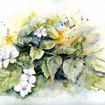 Jasmin (O2) / Watercolour 21x30cm  © janinaB.