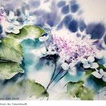 Hydrangea XII 2018 (20) / 30x40cm Watercolour by ©janinaB.