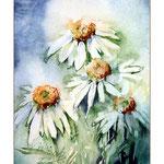 weisser Sonnenhut (O3) / Watercolour 12x16cm