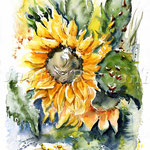 Sunflower I 2009 (8)  / Watercolour 30x40cm  © janinaB.