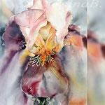 Iris IV 2018 / 30x40cm (22) / Watercolour by ©janinaB.
