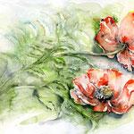 Mohn I 2010 (6) / Watercolour 30x40cm  © janinaB.