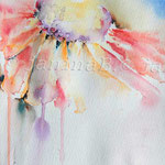 Sonnenhut (O1) / Watercolour 18x25cm