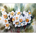 Narzissen / Watercolour 30x40cm