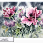 Poppies V 2017 / Watercolour 30x40cm on Arches CP © janinaB. 2017