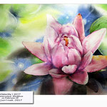 Waterlily I 2017 / Watercolour 30x40cm on Fabriano CP © janinaB. 2017