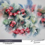 rosehips I (4)/ Watercolour 30x40cm on Arches CP © janinaB. 2016
