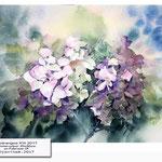 Hydrangea XIII 2017 (14) / Watercolour 30x40cm on Fabriano CP © janinaB. 2017