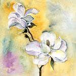 Magnolie (18) / Watercolour 25x25cm  © janinaB.