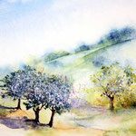 blühende Apfelbäume (O1) / Watercolour 18x24cm ©janinaB.