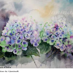 Hydrangea X 2018 / 30x40cm / (22) / Watercolour by ©janinaB.