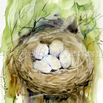 Nest II 2011 (O4) / Watercolour 18x25cm