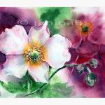 Herbstanemonen (17) / Aquarell 23x30,5cm © janinaB.