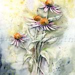 Sonnenhut I 2010 (8) / Watercolour 30x40cm  © janinaB.