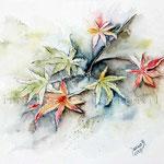 Blätter (O2) / Watercolour 18x25cm