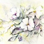 weiße Blüten (1) / Watercolour 25x40cm  © janinaB.