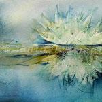 Wasserlilie (O1) / Watercolour 18x25cm