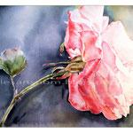 Sonnenkind (17) / Watercolour 22x30cm