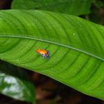 Amazonasgebiet in Peru entdecken