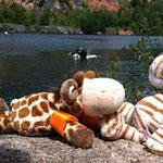Tiger bringt mir das Schwimmen bei. Ganz schön nass und viiiiiieeeeel Wasser.  Die Schwimmflügelchen helfen mir, dass ich nicht unter gehe.