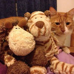 Heeelp!!!!! Tiger, why you didn`t told me, that you have a big brother.....