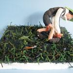 「草むしり」 カン ジュンソン 千葉朝鮮初級学校