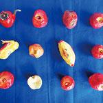「ふぞろいのりんご」 集大成 東京朝鮮第四初中級学校