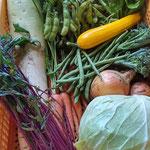21年6月:キャベツ、玉ねぎ、茎ブロッコリ、ズッキーニ、枝豆、バジル、インゲン、大根、ニンジン、赤軸水菜