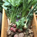 21年4月:キクイモ、じゃがいも、さといも、大根間引き、カブ間引き、赤軸水菜、小松菜、二十日大根、葉玉ねぎ、エシャレット