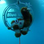 """""""Camel"""" das Maskottchen von Robert hängt sich gleich an Blue Waves. Foto von Robert Belina"""