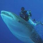 Der Kapitän lässt sich den Wal Hai nicht entgehen.