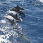 Delphin Show Deluxe