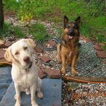 Ron und Nanuk,neue Freunde