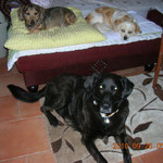 Max,Jonny und Tico