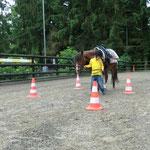 Pferd durch den Parcours führen...