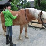 Belohnung fürs Pferd