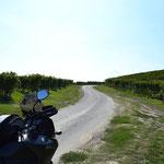 Mitten durch die Weinberge zur Unterkunft