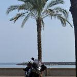 San Remo - Motorrad unter Palmen