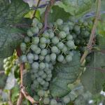 Wein in der Wachau