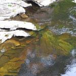 Mooriges Wasser