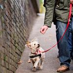 Stadttraining mit den Kleinhunden